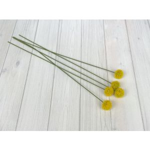 Billy Buttons x 5 - 2131