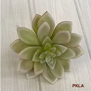 Succulent with Spear Leaves 2406