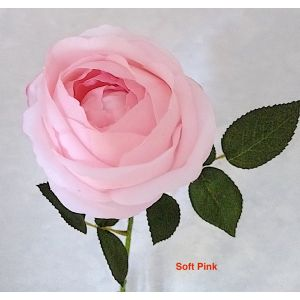REAL TOUCH Rose David Austin Early Bloom 2650