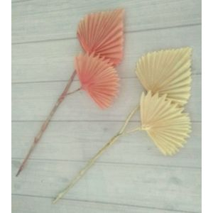SPEAR Palm Leaves X2 - 2697